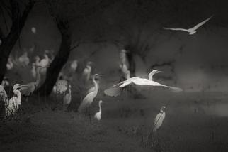 夢幻時分:巴拉特浦的鳥群