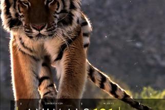101動物教室:老虎