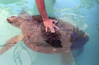 拍照注意事項:請勿蹂躪海龜