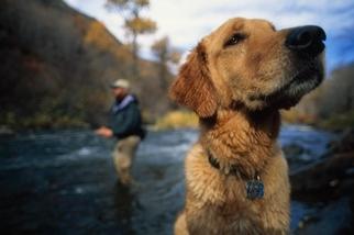 狗兒比我們原本想的更加人性化