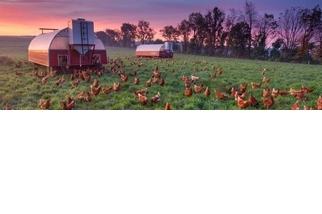 危「雞」四伏:你吃的雞肉有抗生素嗎?