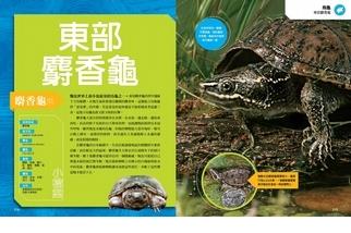 終極爬蟲百科:東部麝香龜