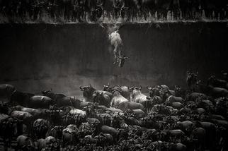 信念的一躍:非洲牛羚