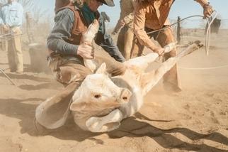 影像藝廊:肉食者的抉擇