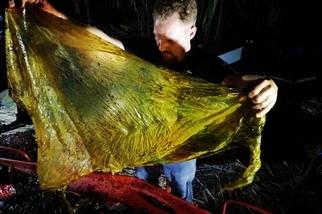 鯨魚擱淺菲律賓海攤,胃裡塞了40公斤的塑膠垃圾