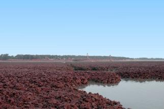 大潭藻礁獲海洋保育組織「Mission Blue」指定為「希望熱點」