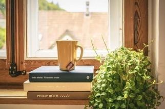 植物能淨化室內空氣嗎?每平公尺放100棵也許有用
