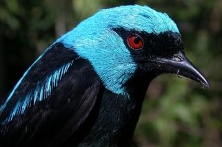 你喝咖啡時有想到鳥類的感受嗎?