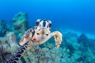超讚海龜自拍照!