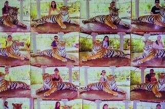 野生動物旅遊