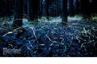 《絕世瞬間》螢火蟲光軌