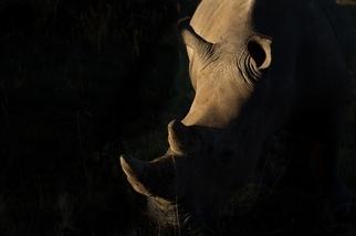 被偷的犀牛角