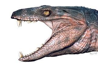 吃素的鱷魚曾活躍於恐龍時代!