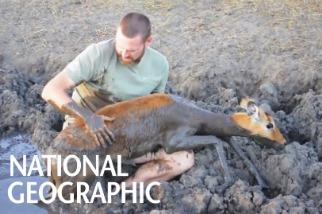 你會為了拯救羚羊而跳進泥坑裡嗎?