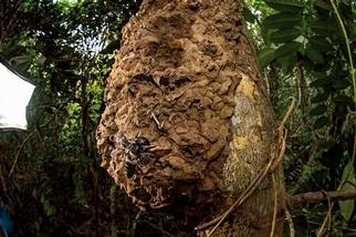 在野外拍攝到最大的蜂