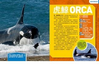 《國家地理終極捕食動物百科》虎鯨