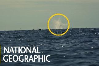 「炸魚」所造成的生態大浩劫
