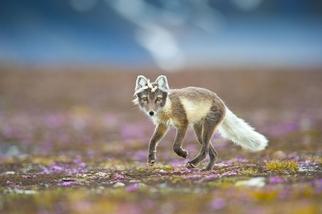 紫色薄霧中的狐狸姑娘