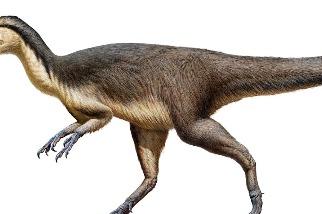 南極附近首度發現恐龍羽毛