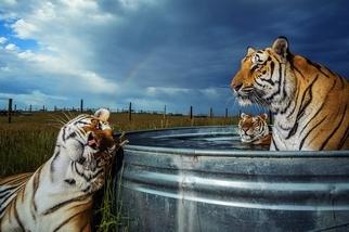 老虎就在你身邊