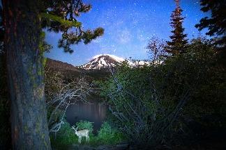 拉森火山與鹿