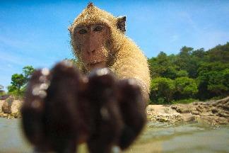 海邊的猴子