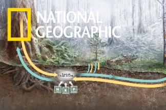 解碼自然:讓「樹木」聊天的地下網路系統