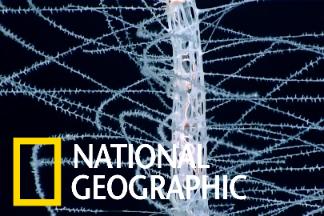 NOAA鏡頭下的怪奇海底生物
