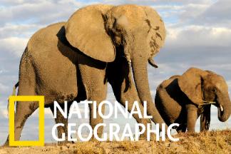 非洲「五巨頭」中,你最喜歡哪一種呢?