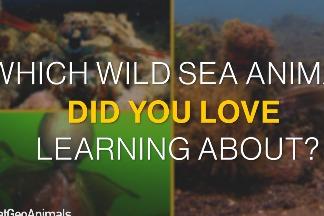 以下三種神奇海洋生物,你最喜歡哪一種?