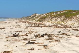 海底火山、海洋熱浪與浮石:澳洲海灘300萬神祕鳥屍死因揭曉
