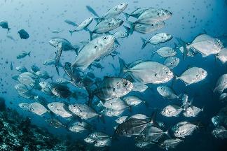 是誰殺死海洋生物? 研究指化學與塑膠汙染物影響重大 卻未受應有監管