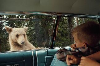 熊熊出現!