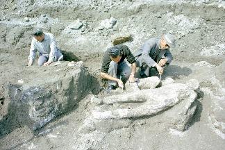 龐貝城考古