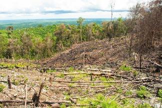 毀林面積逾一個泰國 調查:本世紀東南亞山區森林加速流失