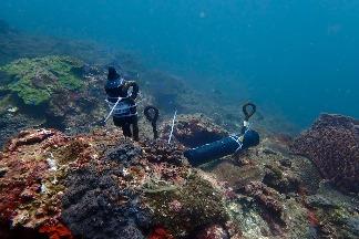 海域生態調查先期報告出爐 環境DNA檢測臺灣海峽魚種230種最多