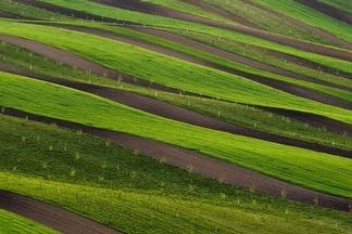 綠色田地:摩拉維亞