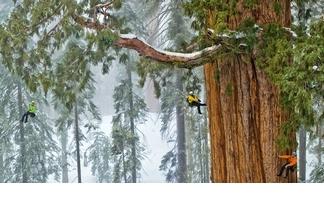影像藝廊:森林裡的巨人