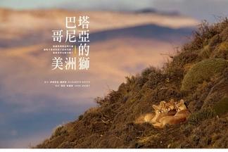 【2019年3月號】巴塔哥尼亞的美洲獅