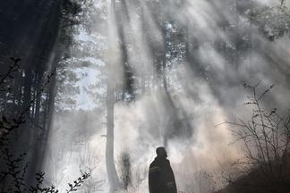 煙霧中的樹林