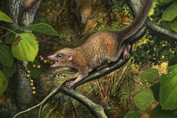 古代靈長類曾生活在霸王龍左右?科學家發現了支持理論的新證據!