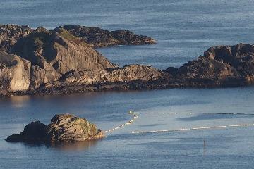 動彈不得六小時 挪威抓小鬚鯨做噪音實驗 50位科學家疾呼先不要