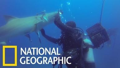 「可以幫幫我嗎?」鯊魚腹部卡魚鉤,所幸潛水員伸出援手!