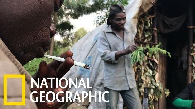 姆巴提族人的非法大麻事業