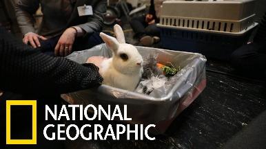 感恩節對美國的寵物兔來說不見得是好事……