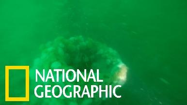 探訪比利時外海的二戰潛艇船骸