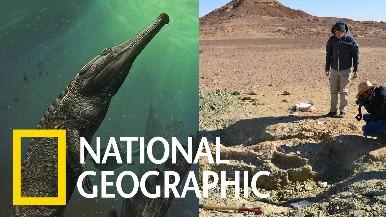 突尼西亞沙漠中的「君王馬奇莫鱷」化石