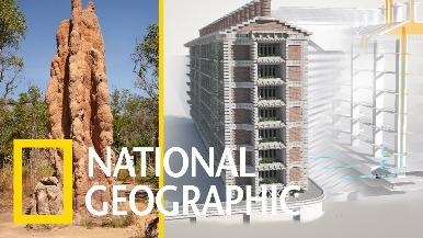 解碼自然:受到白蟻丘的啟發,這棟非洲大樓不用冷氣就能「自然涼」!《國家地理》雜誌