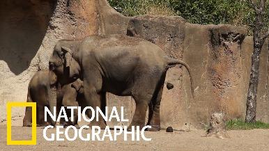 動物園為什麼要收集動物的便便呢?