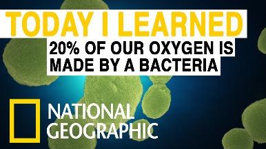 每日酷知識:我們的氧氣有20%來自細菌
